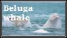 beluga by LackToastAndToleranc