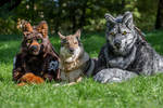 Wolf trio by WMW66-costumes
