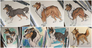 Rough Collies Commission