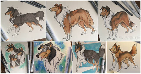 Rough Collies Commission by KimsSketchebook