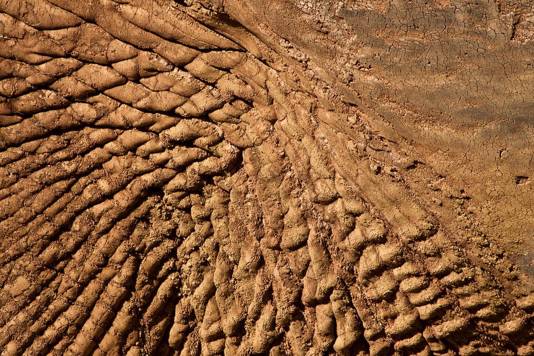 Elephant Skin 01 by Xs9nake