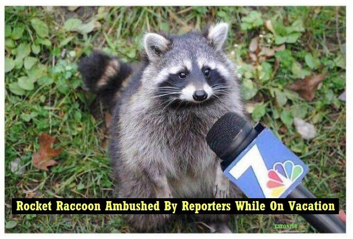 Rocket Raccoon Ambushed By Reporters! by Estonius
