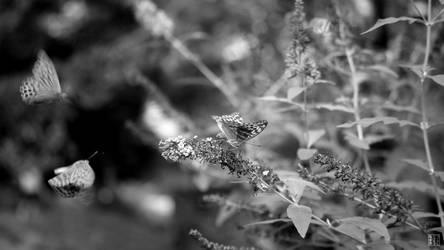 Butterflies 2014-09-21 16-07-46 wp