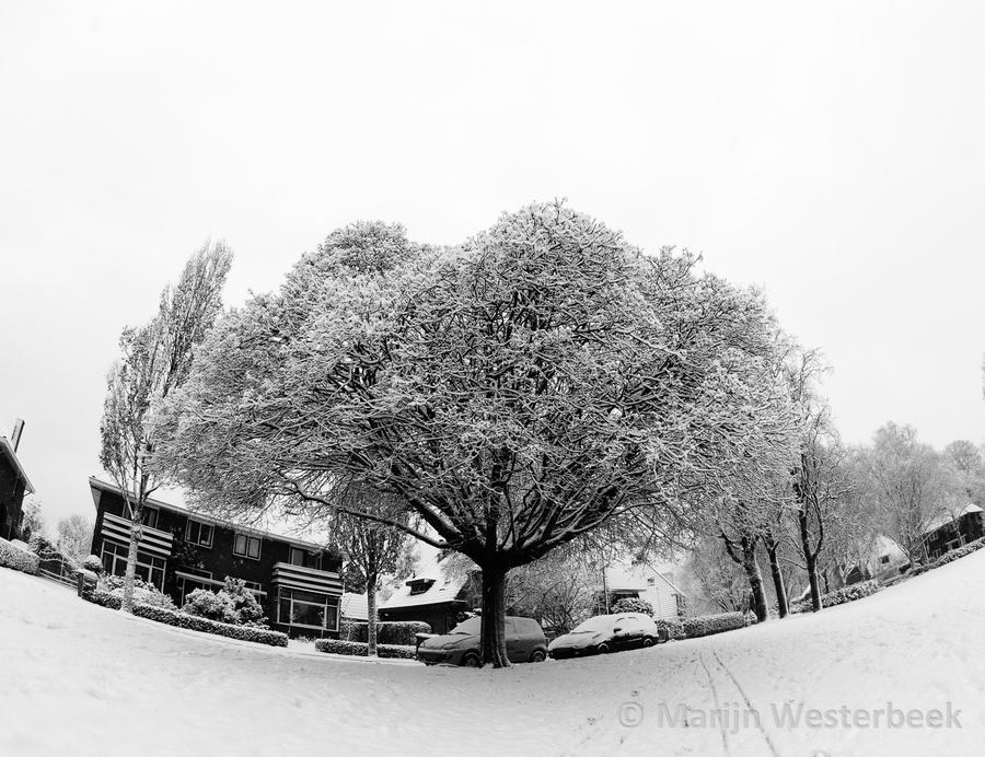 http://fc05.deviantart.net/fs71/i/2010/353/5/8/epic_tree_of_snow_by_citruspers-d356uh4.jpg