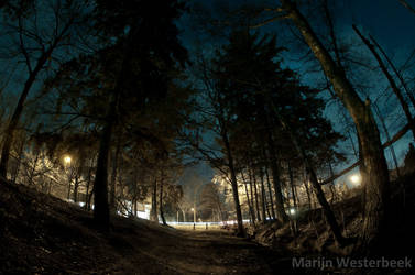 Forest road night by Citruspers