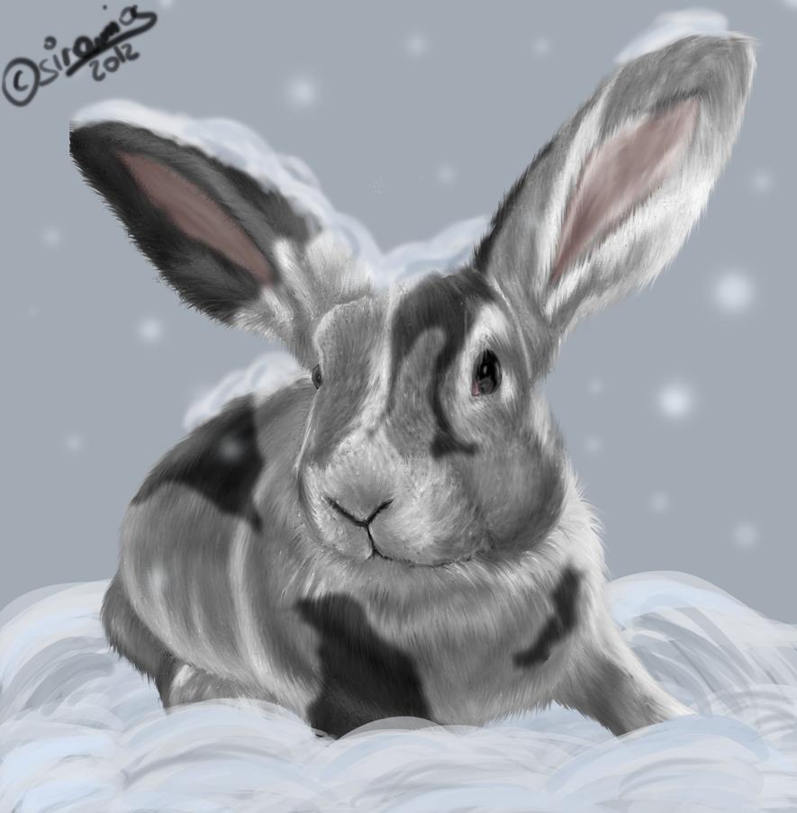Snow-Rabbit [Christmas Gift] by siramios