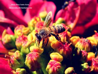 Primavera by claracosta