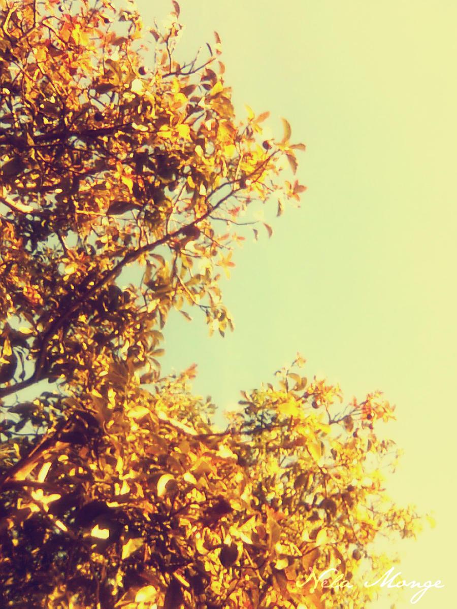 Vintage Fall by Nmpingui on DeviantArt Vintage Camera Backgrounds