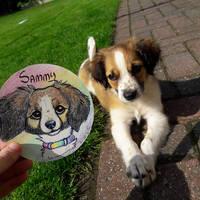 Sammy - our new puppy!