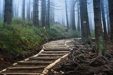 Forest by maariusz