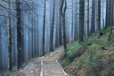 In the woods by maariusz