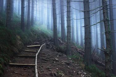 Misty woods by maariusz