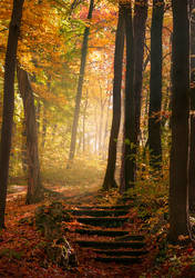 Stairway to fairyland by maariusz
