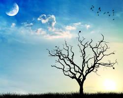 tree by maariusz