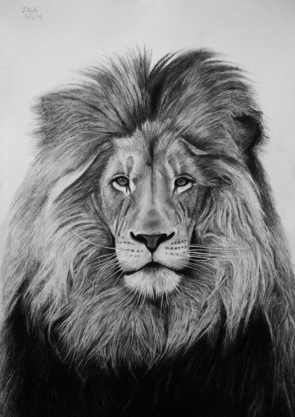 Lion - A Majestic Stare by Vishvesh99