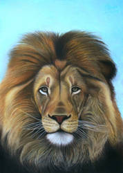 Lion - The majesty by Vishvesh99