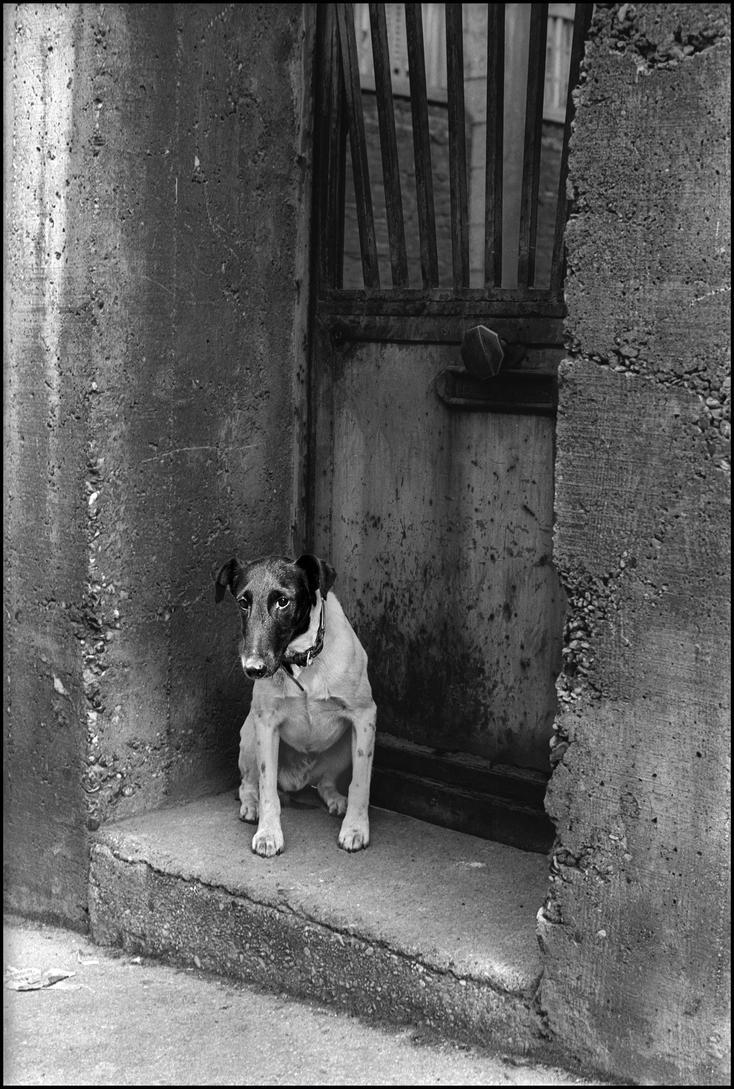 Journal d'un chien by SUDOR