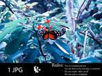 Butterfly by Eerilyfair-Stock