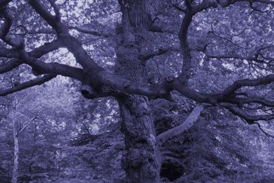 Midnight Blue Tree