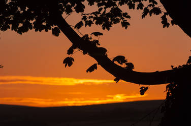 Tree Branch Silhouetted Against Sunset