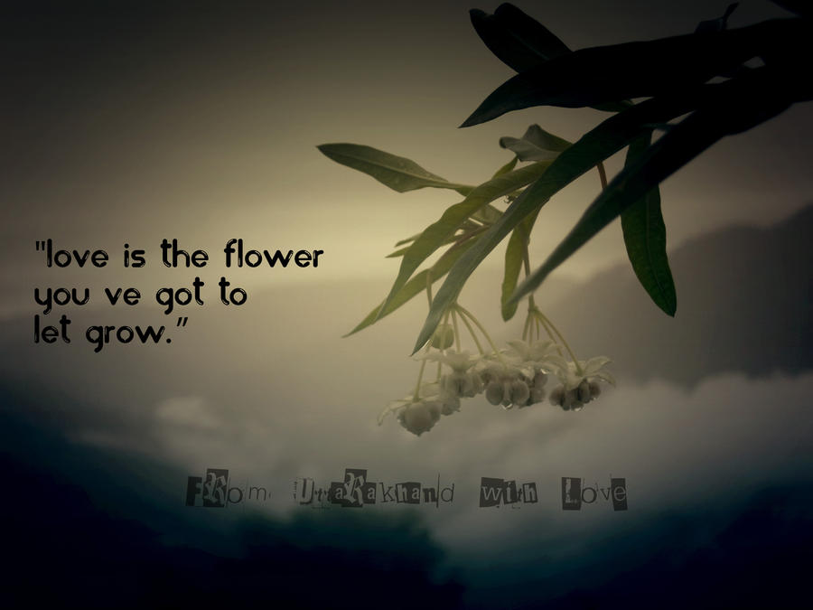 Love Is The Flower Quotes By Akhileshisme ...