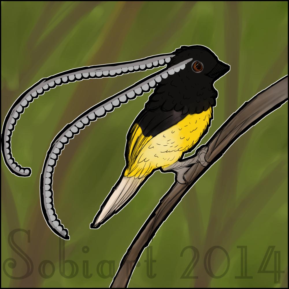 King of saxony bird-of...