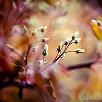 buds on fire by Frall