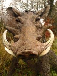 Warthog by mattcummings