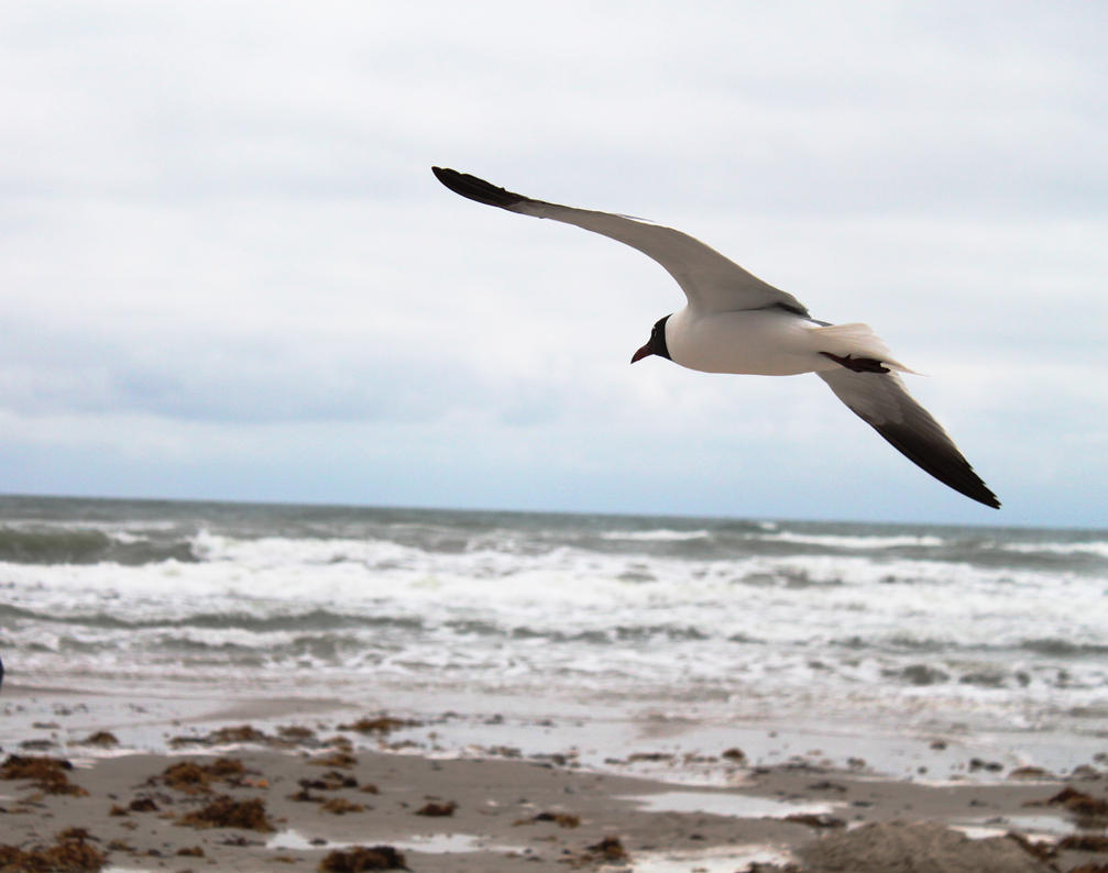 Gull Standing Still in a 20 knot wind by TokiiWorks