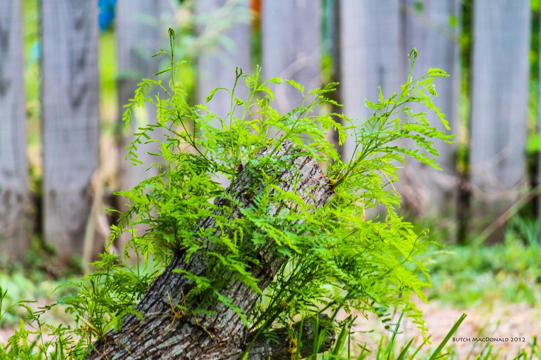 A tree stump pretending it's not dead by TokiiWorks