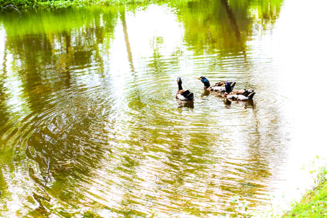 Duck Waves by TokiiWorks