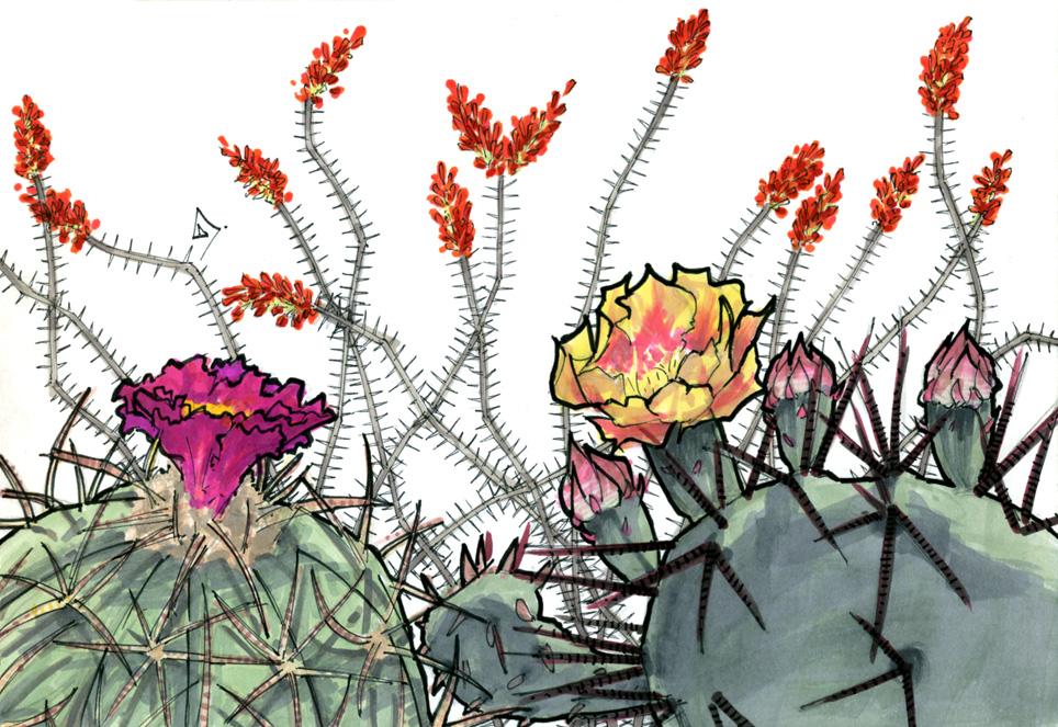 Desert Bloom by RandomCushing