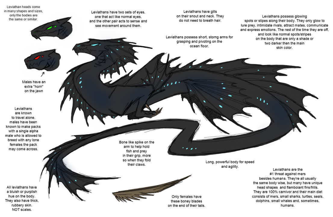Leviathan Species Ref: MORE INFO BELOW by CoffeeAddictedDragon