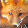 Free red fox icon 100x100 by SuperTuffPinkPuff