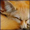 Free fennec fox icon 100x100 by SuperTuffPinkPuff