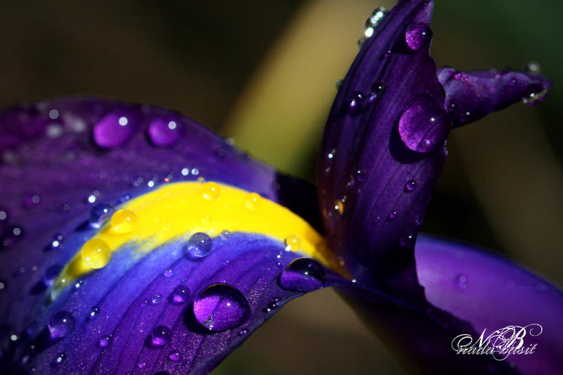 Nature's Intensity by Silver-Dew-Drop on DeviantArt