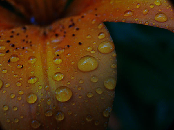 -: Invigorate :- by Silver-Dew-Drop