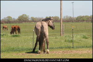 Mustang Stock 09 by DancingFoxie
