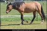 Mustang Stock 19
