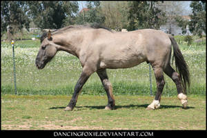 Mustang Stock 24 by DancingFoxie