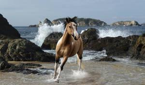 Inkheart Equestrian by DancingFoxie