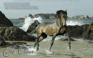 The Ocean by DancingFoxie