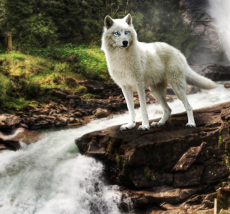 RQ: Virgo by alpoxwolf