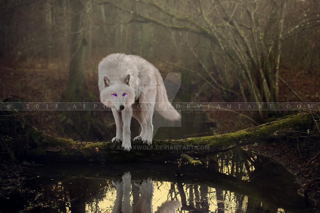 COMM: Vanity by alpoxwolf