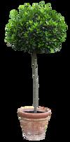 Cutout Tree in a flowerpot
