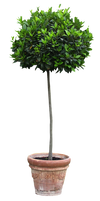 Cutout Tree in a flowerpot by oilusionista-stock