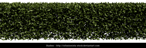Bushes cutout PNG by oilusionista-stock