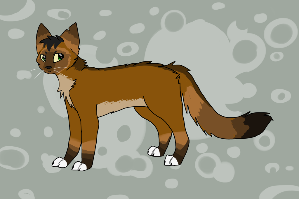 Recommended Age For Warrior Cats