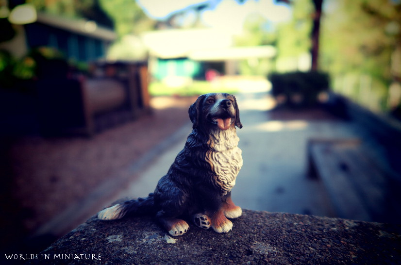 Bernese buddy by Worlds-in-Miniature