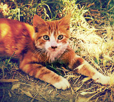 gattous by struky